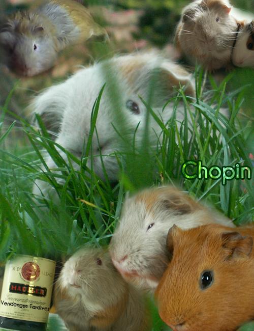 http://delirium.cowblog.fr/images/CHOPIN.png